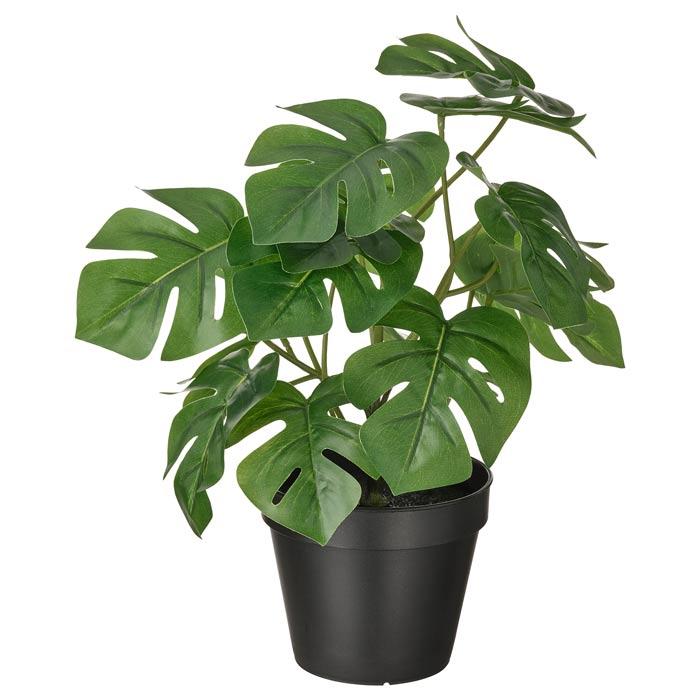 گیاه بونسای